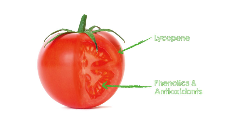 A cut-away of a tomato showing the beneficial elements of lycopene and phenolics