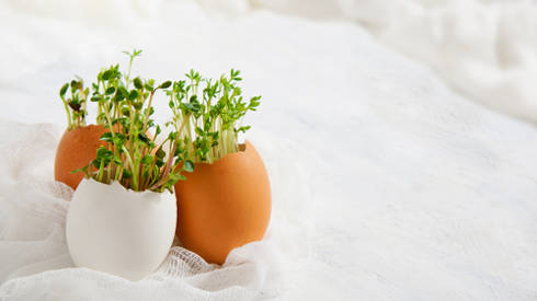 seedlings in egg shells