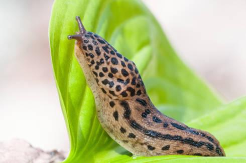 a slug